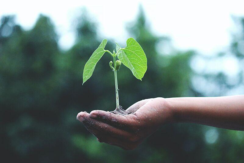 Begeisterung für Nachhaltigkeitsthemen wecken