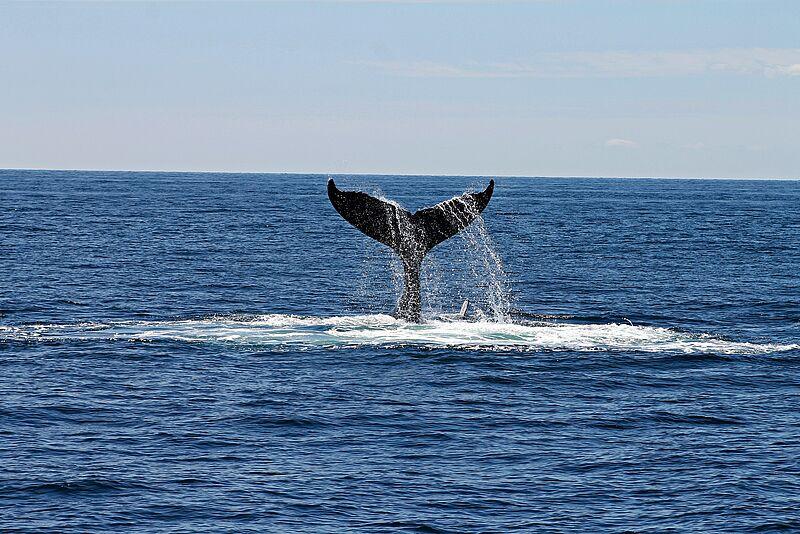 """""""Whalehaven"""": Kreative PR-Ideen für die Wilhelmshavener Schweinswal-Tage"""