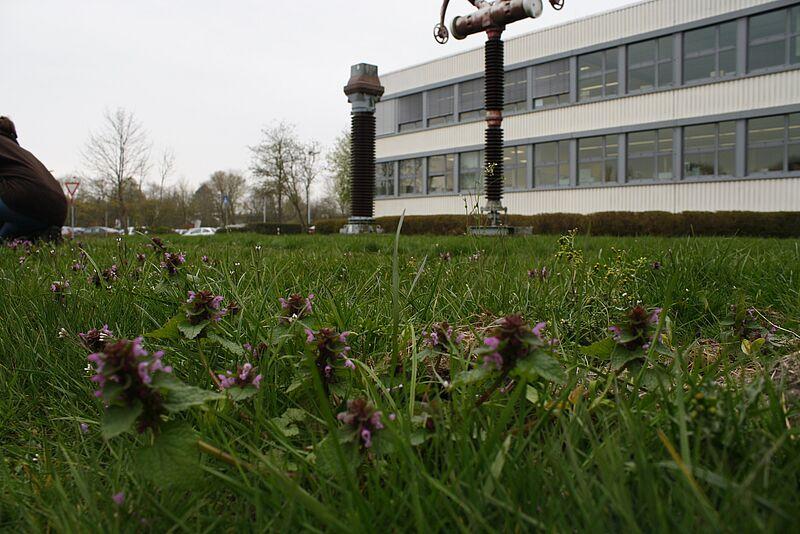 Campus Wilhelmshaven soll Insekten neuen Lebensraum bieten