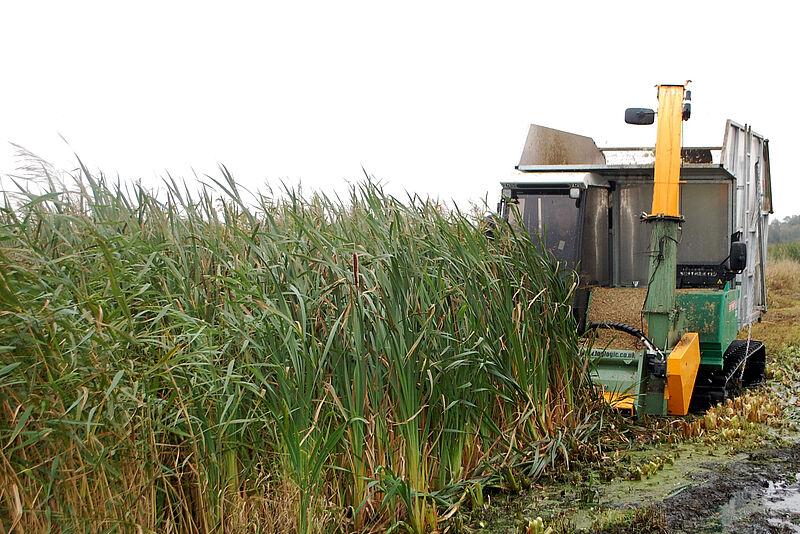 Wärmedämmung von Häusern mit Biomasse aus dem Moor